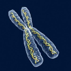 chromosome illustration